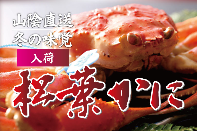 Direct delivery from San-in! Seasonal crab Matuba-Kani